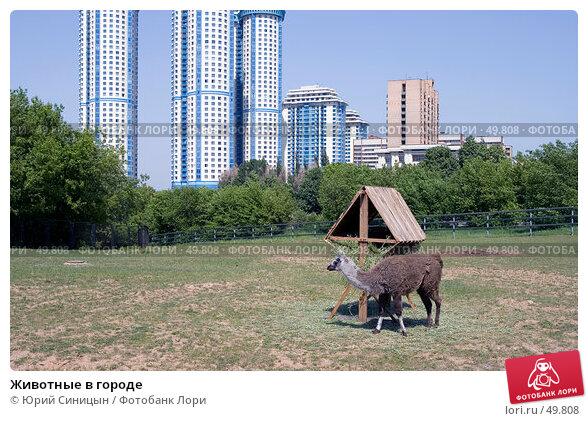 Купить «Животные в городе», фото № 49808, снято 28 мая 2007 г. (c) Юрий Синицын / Фотобанк Лори