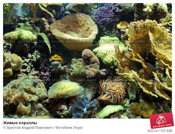 Живые кораллы, фото № 121628, снято 12 ноября 2006 г. (c) Арестов Андрей Павлович / Фотобанк Лори