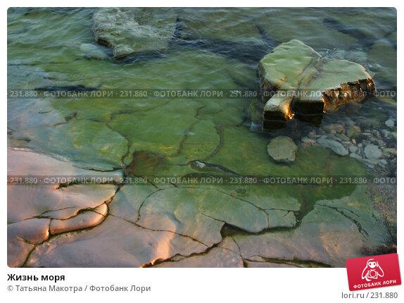 Жизнь моря, фото № 231880, снято 27 августа 2005 г. (c) Татьяна Макотра / Фотобанк Лори