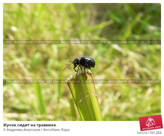 Жучок сидит на травинке, фото № 161204, снято 12 июня 2007 г. (c) Андреева Анастасия / Фотобанк Лори