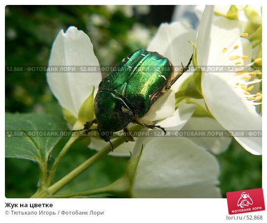 Купить «Жук на цветке», фото № 52868, снято 6 июня 2007 г. (c) Тютькало Игорь / Фотобанк Лори