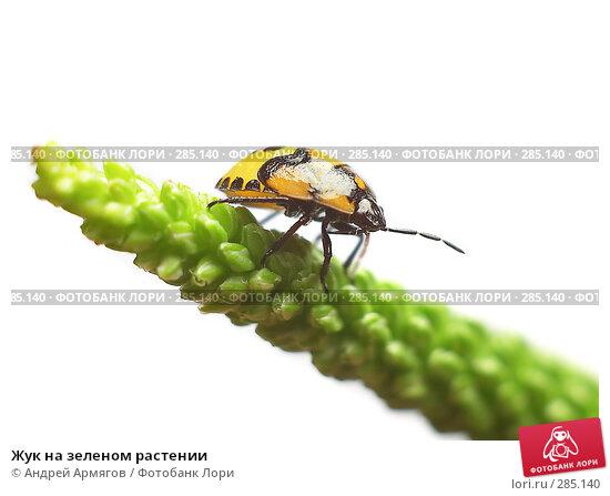 Жук на зеленом растении, фото № 285140, снято 28 июня 2006 г. (c) Андрей Армягов / Фотобанк Лори