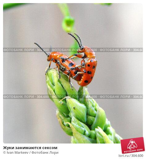 Купить «Жуки занимаются сексом», фото № 304600, снято 31 мая 2008 г. (c) Ivan Markeev / Фотобанк Лори