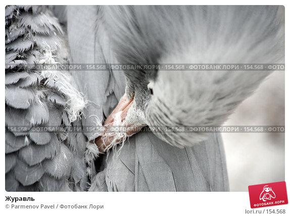 Журавль, фото № 154568, снято 11 декабря 2007 г. (c) Parmenov Pavel / Фотобанк Лори