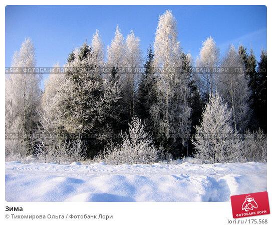 Зима, фото № 175568, снято 5 января 2006 г. (c) Тихомирова Ольга / Фотобанк Лори