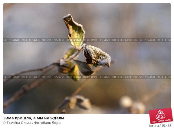 Зима пришла, а мы не ждали, фото № 15468, снято 21 декабря 2006 г. (c) Ткачёва Ольга / Фотобанк Лори