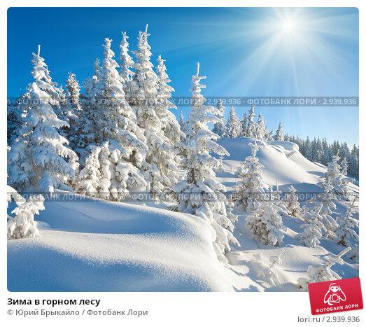 Купить «Зима в горном лесу», фото № 2939936, снято 8 марта 2010 г. (c) Юрий Брыкайло / Фотобанк Лори