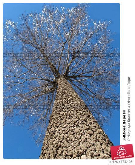 Зимнее дерево, фото № 173108, снято 16 февраля 2007 г. (c) Надежда Болотина / Фотобанк Лори
