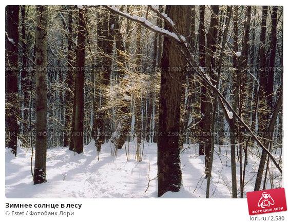 Купить «Зимнее солнце в лесу», фото № 2580, снято 22 апреля 2018 г. (c) Estet / Фотобанк Лори