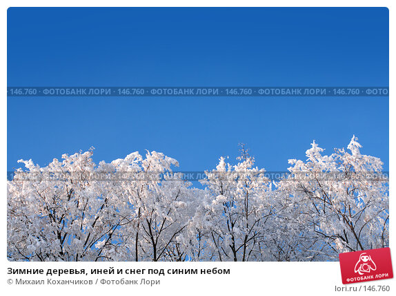 Зимние деревья, иней и снег под синим небом, фото № 146760, снято 23 октября 2016 г. (c) Михаил Коханчиков / Фотобанк Лори