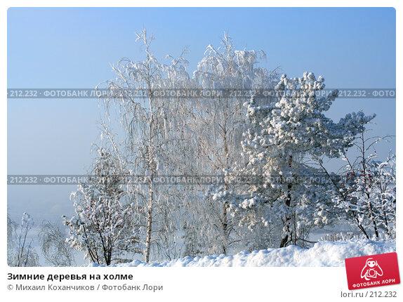 Зимние деревья на холме, фото № 212232, снято 12 декабря 2007 г. (c) Михаил Коханчиков / Фотобанк Лори