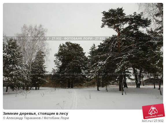 Купить «Зимние деревья, стоящие в лесу», фото № 27932, снято 24 ноября 2017 г. (c) Александр Тараканов / Фотобанк Лори