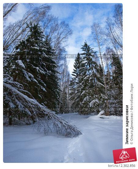 Купить «Зимние зарисовки», фото № 2302856, снято 12 ноября 2019 г. (c) Ольга Денисова / Фотобанк Лори