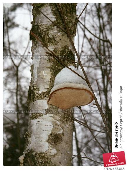 Купить «Зимний гриб», фото № 55868, снято 22 марта 2018 г. (c) Чертопруд Сергей / Фотобанк Лори
