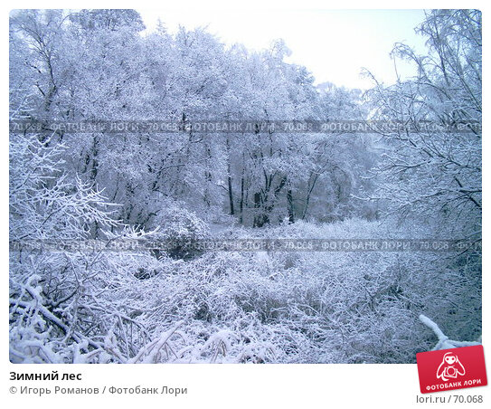 Купить «Зимний лес», фото № 70068, снято 4 декабря 2005 г. (c) Игорь Романов / Фотобанк Лори