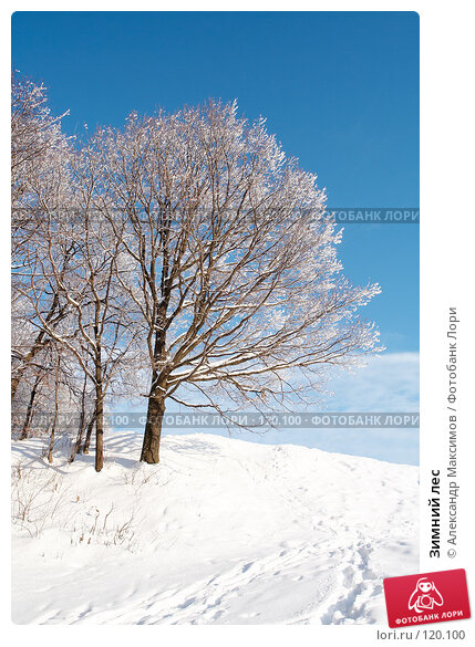 Зимний лес, фото № 120100, снято 31 декабря 2005 г. (c) Александр Максимов / Фотобанк Лори