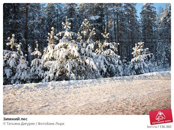 Купить «Зимний лес», фото № 136360, снято 1 декабря 2007 г. (c) Татьяна Дигурян / Фотобанк Лори