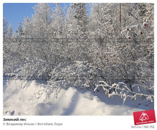 Зимний лес, фото № 160152, снято 24 декабря 2007 г. (c) Владимир Ильин / Фотобанк Лори