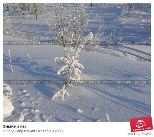 Купить «Зимний лес», фото № 160236, снято 24 декабря 2007 г. (c) Владимир Ильин / Фотобанк Лори