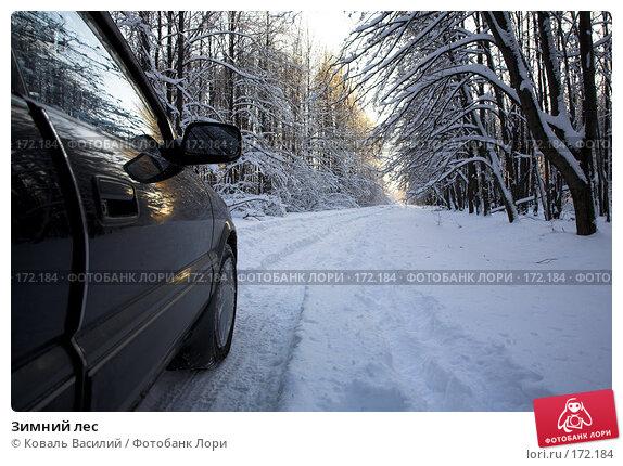 Зимний лес, фото № 172184, снято 10 ноября 2007 г. (c) Коваль Василий / Фотобанк Лори