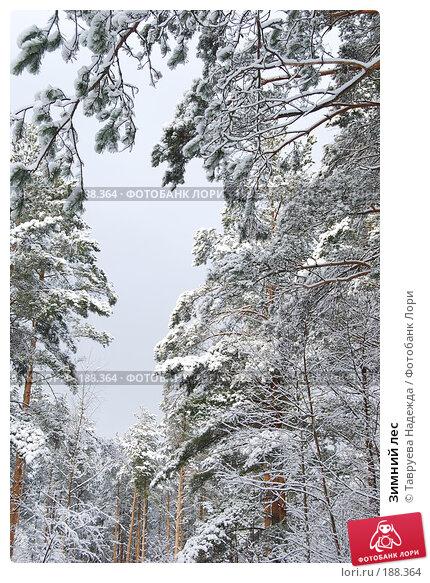 Зимний лес, фото № 188364, снято 27 января 2008 г. (c) Тавруева Надежда / Фотобанк Лори