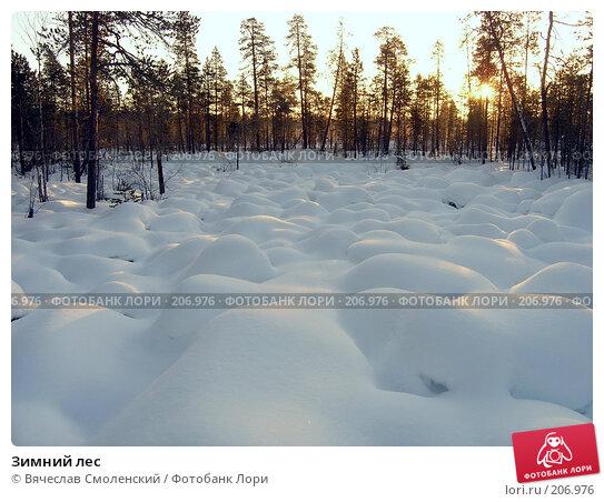 Зимний лес, фото № 206976, снято 9 февраля 2008 г. (c) Вячеслав Смоленский / Фотобанк Лори