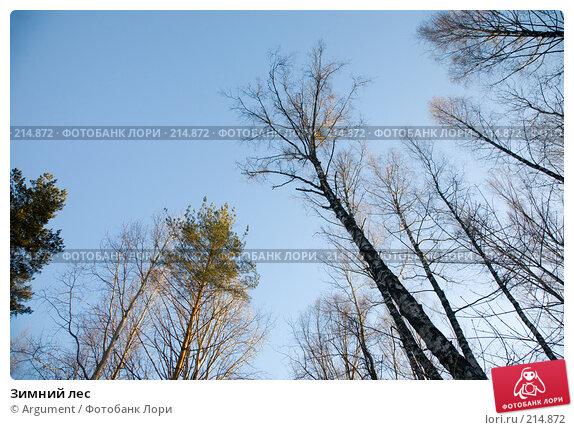 Зимний лес, фото № 214872, снято 6 января 2008 г. (c) Argument / Фотобанк Лори