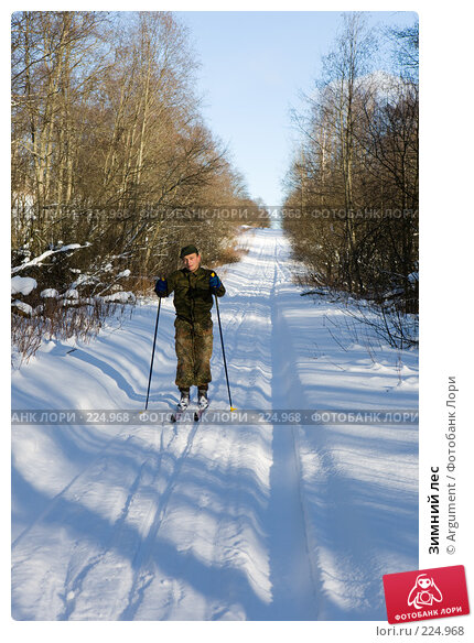 Купить «Зимний лес», фото № 224968, снято 19 февраля 2008 г. (c) Argument / Фотобанк Лори