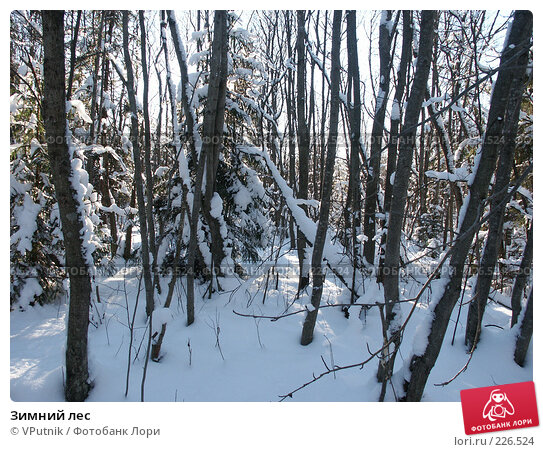 Зимний лес, фото № 226524, снято 12 февраля 2007 г. (c) VPutnik / Фотобанк Лори