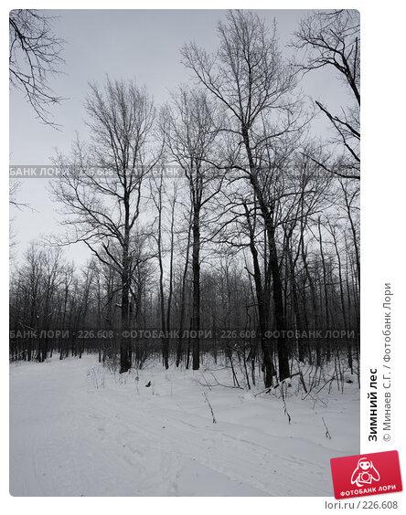 Купить «Зимний лес», фото № 226608, снято 20 января 2008 г. (c) Минаев С.Г. / Фотобанк Лори