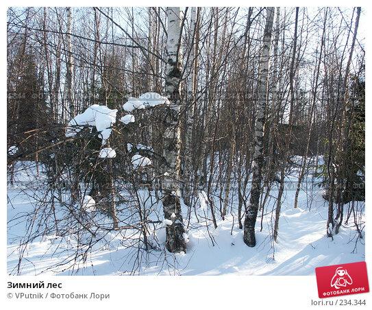 Купить «Зимний лес», фото № 234344, снято 25 февраля 2007 г. (c) VPutnik / Фотобанк Лори