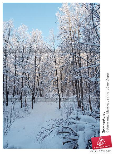 Зимний лес, фото № 292612, снято 31 декабря 2005 г. (c) Александр Максимов / Фотобанк Лори