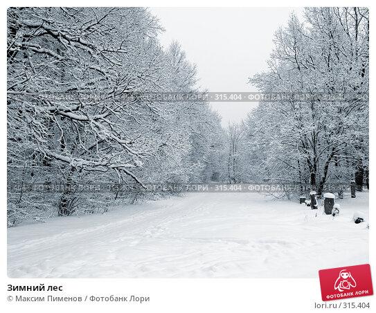 Зимний лес, фото № 315404, снято 9 января 2007 г. (c) Максим Пименов / Фотобанк Лори