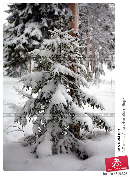 Зимний лес, фото № 319376, снято 30 декабря 2005 г. (c) Татьяна Лата / Фотобанк Лори