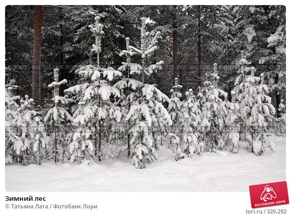 Зимний лес, фото № 320292, снято 30 декабря 2005 г. (c) Татьяна Лата / Фотобанк Лори