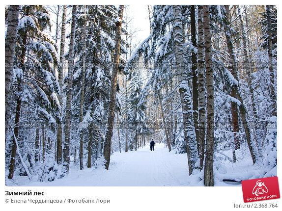 Зимний лес. Стоковое фото, фотограф Елена Чердынцева / Фотобанк Лори