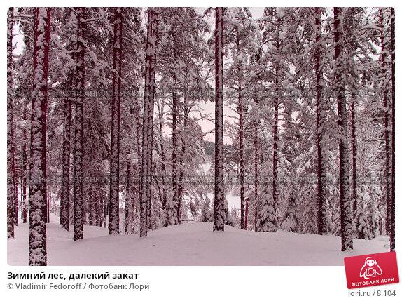 Зимний лес, далекий закат, фото № 8104, снято 26 июля 2017 г. (c) Vladimir Fedoroff / Фотобанк Лори