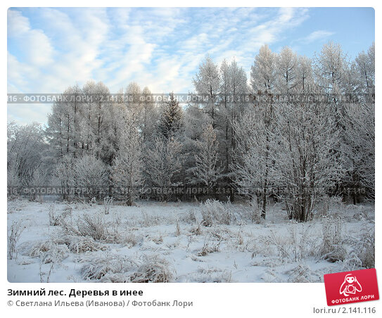 Купить «Зимний лес. Деревья в инее», фото № 2141116, снято 9 декабря 2007 г. (c) Светлана Ильева (Иванова) / Фотобанк Лори