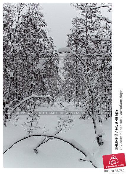Зимний лес, январь, фото № 8732, снято 28 марта 2017 г. (c) Vladimir Fedoroff / Фотобанк Лори