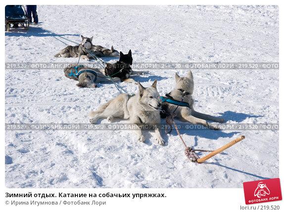 Зимний отдых. Катание на собачьих упряжках., фото № 219520, снято 9 марта 2008 г. (c) Ирина Игумнова / Фотобанк Лори
