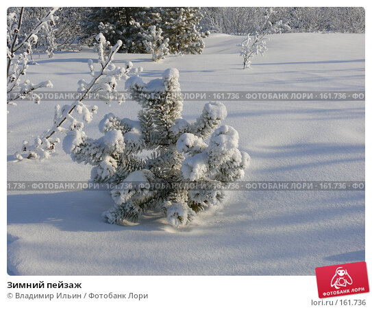 Зимний пейзаж, фото № 161736, снято 24 декабря 2007 г. (c) Владимир Ильин / Фотобанк Лори