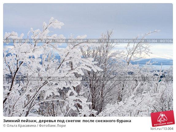 Купить «Зимний пейзаж, деревья под снегом  после снежного бурана», фото № 13004, снято 3 ноября 2006 г. (c) Ольга Красавина / Фотобанк Лори