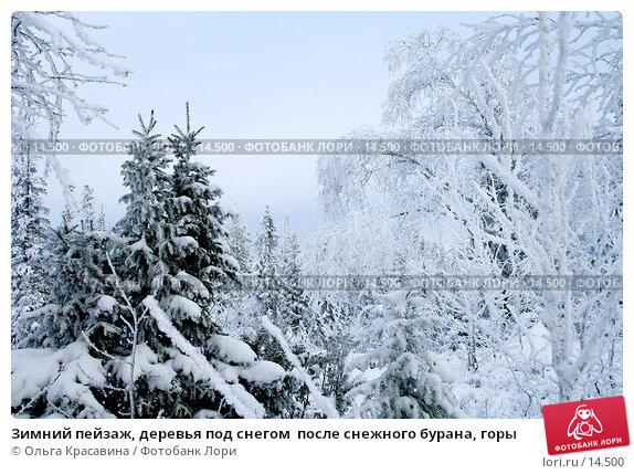 Зимний пейзаж, деревья под снегом  после снежного бурана, горы, фото № 14500, снято 3 ноября 2006 г. (c) Ольга Красавина / Фотобанк Лори