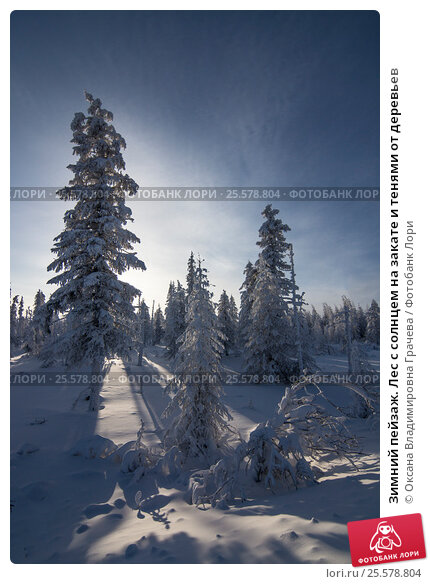 Купить «Зимний пейзаж. Лес с солнцем на закате и тенями от деревьев», фото № 25578804, снято 15 декабря 2014 г. (c) Оксана Владимировна Грачева / Фотобанк Лори