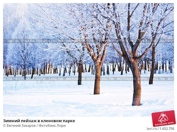 Купить «Зимний пейзаж в кленовом парке», фото № 1652756, снято 19 октября 2018 г. (c) Евгений Захаров / Фотобанк Лори