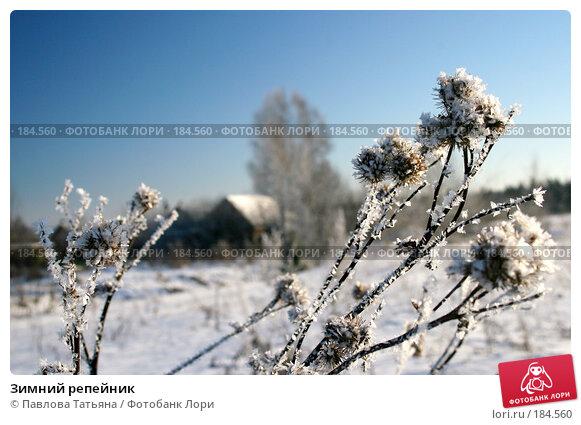 Зимний репейник, фото № 184560, снято 4 января 2008 г. (c) Павлова Татьяна / Фотобанк Лори