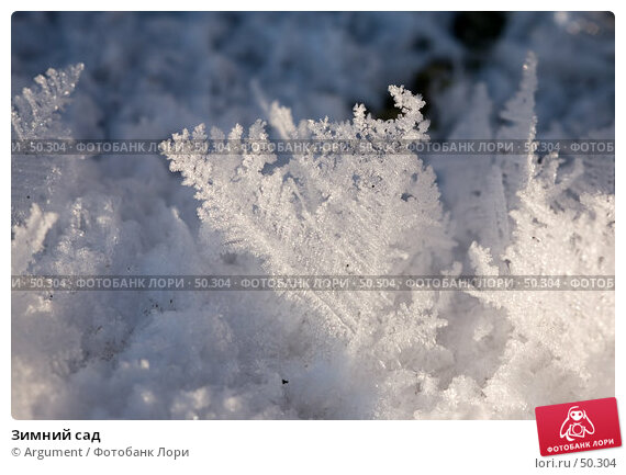Зимний сад, фото № 50304, снято 8 февраля 2007 г. (c) Argument / Фотобанк Лори
