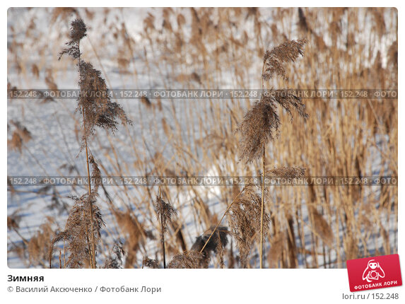 Зимняя, фото № 152248, снято 24 февраля 2007 г. (c) Василий Аксюченко / Фотобанк Лори