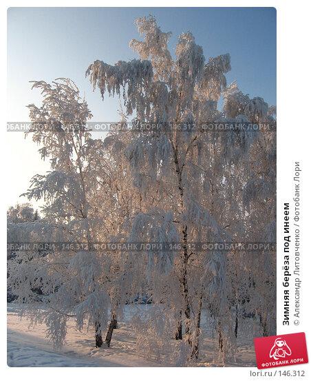 Купить «Зимняя берёза под инеем», фото № 146312, снято 10 декабря 2007 г. (c) Александр Литовченко / Фотобанк Лори