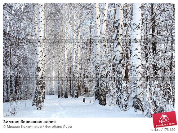 Зимняя березовая аллея, фото № 173620, снято 8 января 2008 г. (c) Михаил Коханчиков / Фотобанк Лори